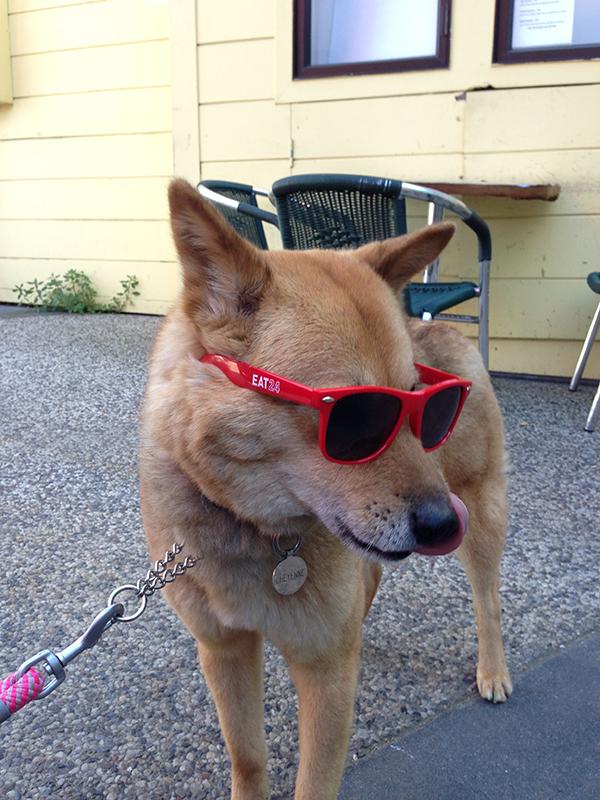 Doggie_Swag_Eat24