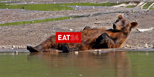 Eat24 bear dick commercial