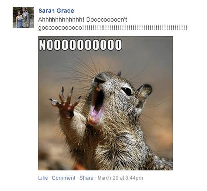squirrelno