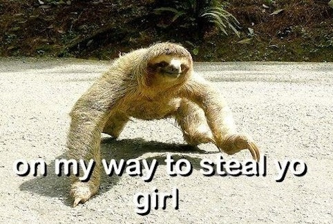 Sloth on my way to steal yo girl