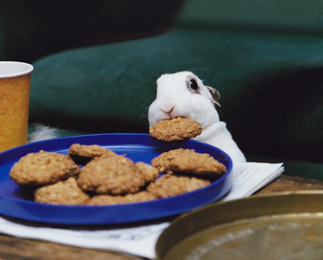 bunnycookie