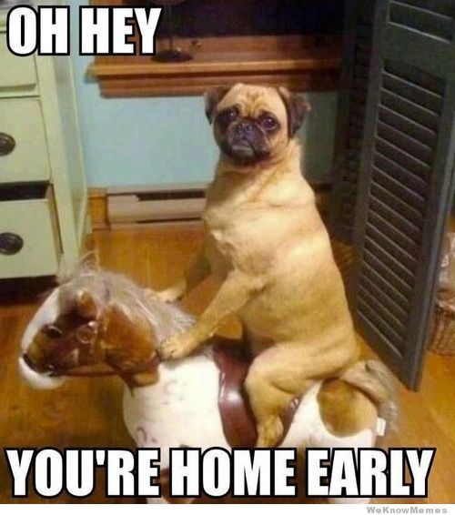 doghomeearly