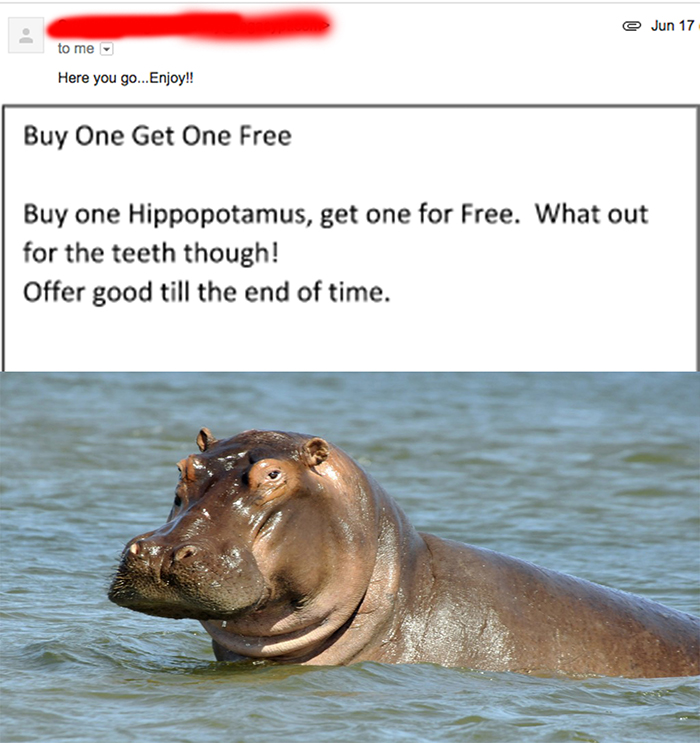 We don't know what we'd do with two hippos, but we c'mon, when are we gonna get another chance at two whole hippos.